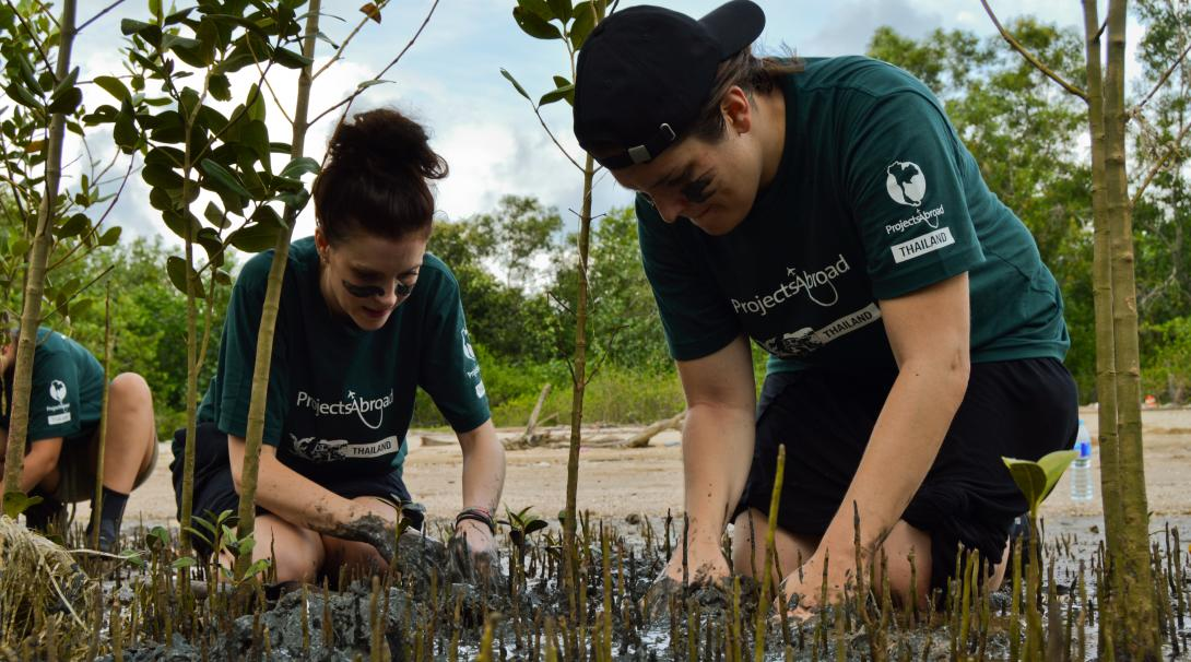 Conservation volunteers carefully dig up mangrove roots